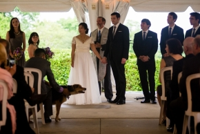 wedding dogs-6
