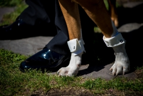 wedding dogs-7