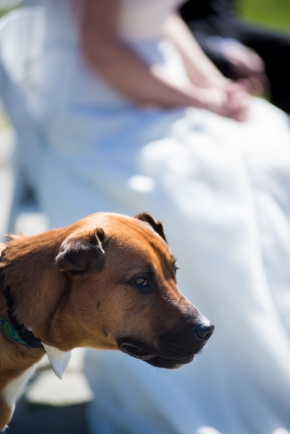 wedding dogs-8