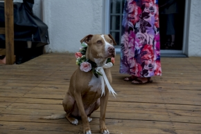 wedding dogs-10