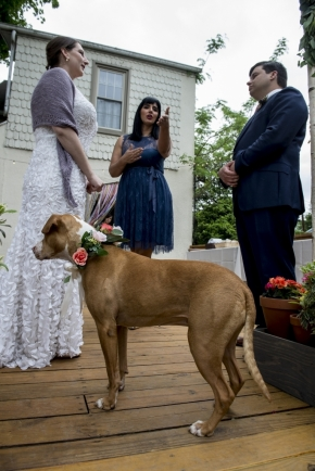 wedding dogs-11