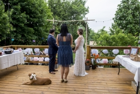 wedding dogs-14