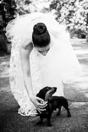 wedding dogs-20