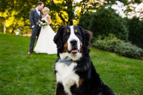 wedding dogs-59