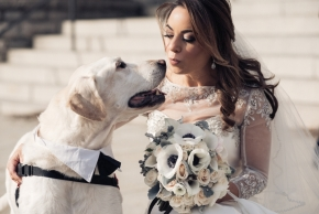 wedding dogs-30