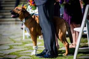 wedding dogs-32