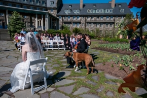 wedding dogs-35