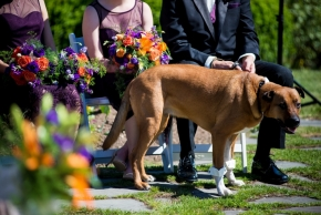 wedding dogs-36