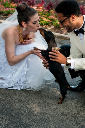 wedding dogs-38