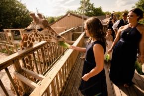 zoo_wedding0351